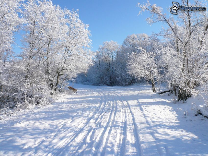 snow-covered road, tracks in the snow, frozen trees, winter