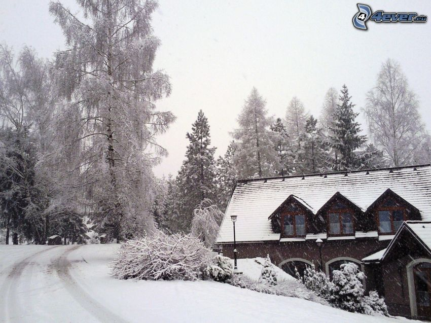 snowy cottage, snow-covered road, snowy trees, snow, winter, bushes