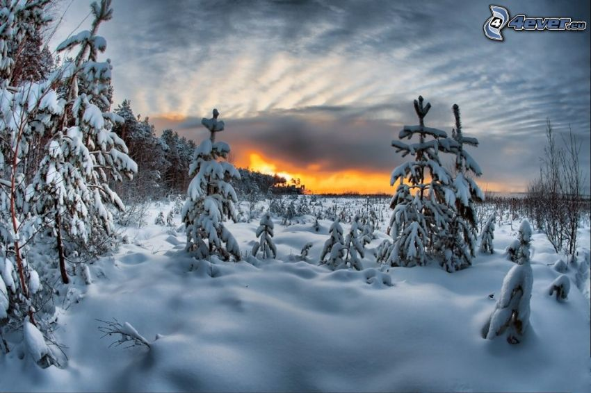 snowy forest, winter sunset, snow