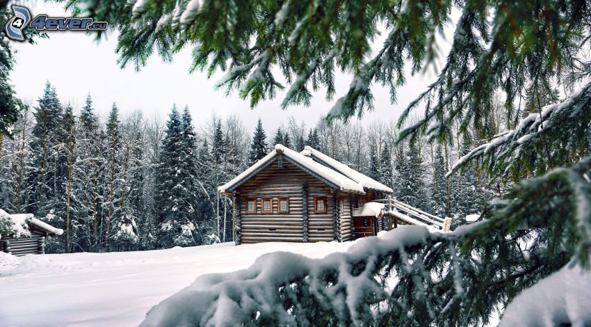 snowy house, snowy conifer