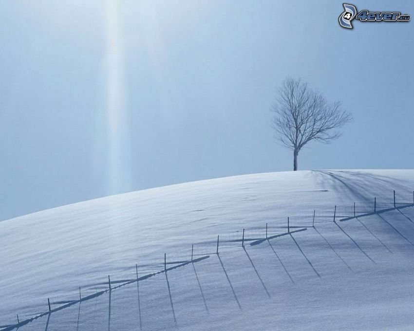 snowy meadow, tree over the field, fence, sunbeams