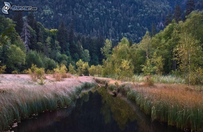 stream, deciduous trees, coniferous forest