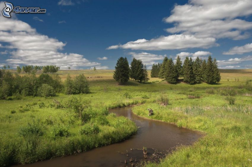 stream, grass, coniferous trees, clouds