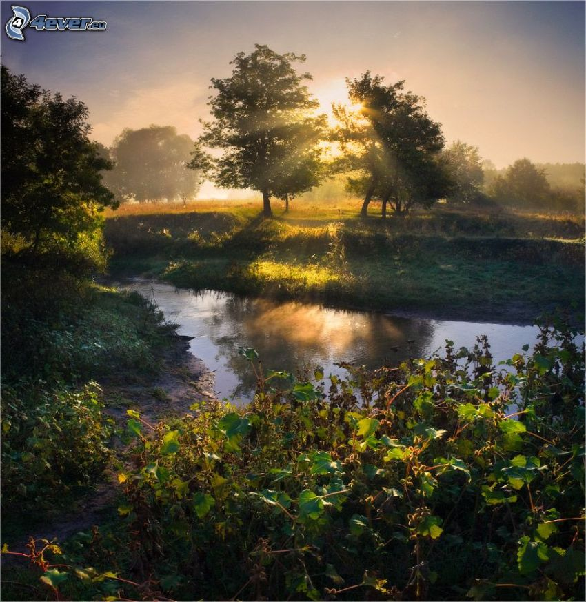 stream, trees, sun