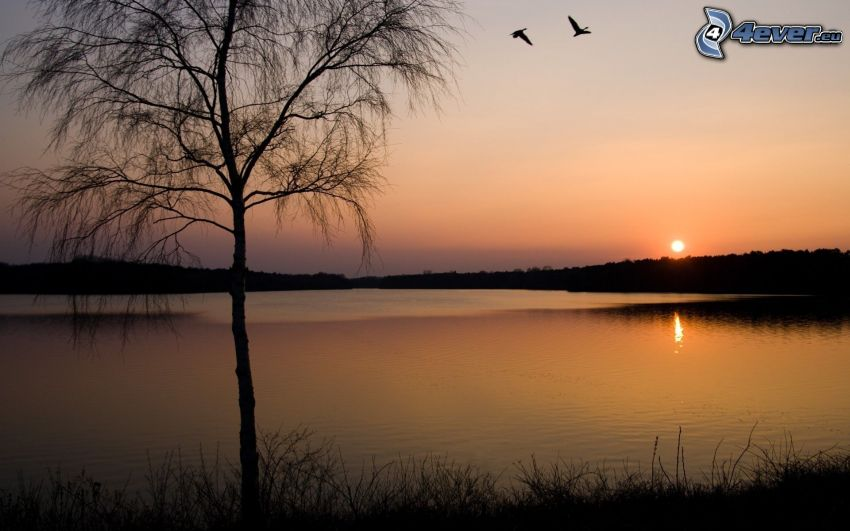 sunset over the lake, silhouette of tree, birds