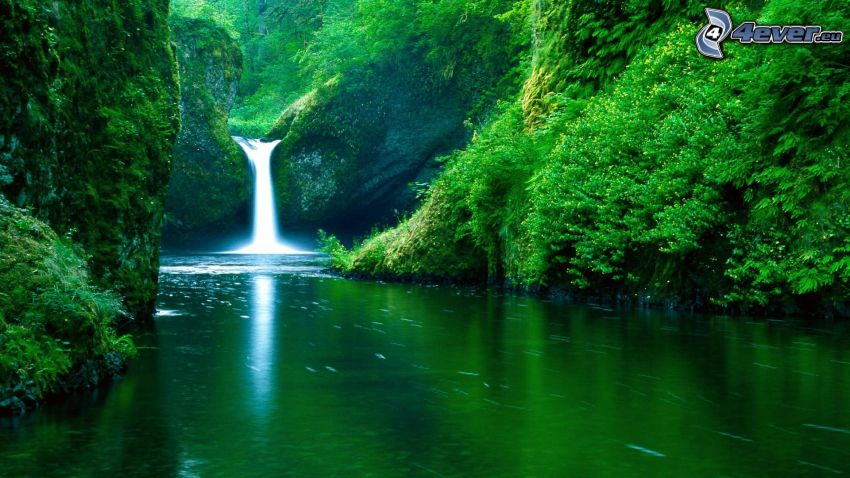 waterfall in the jungle, stream, greenery