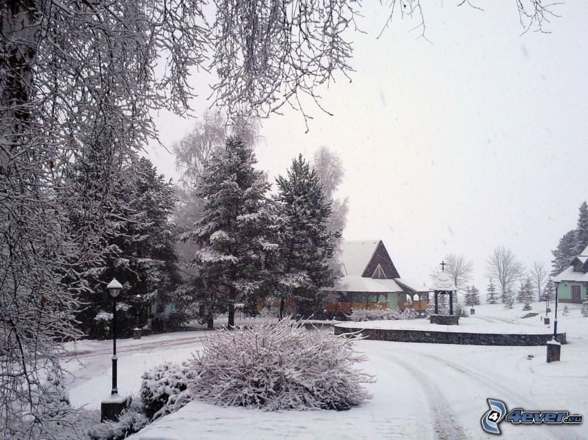 winter, snow, snowflakes