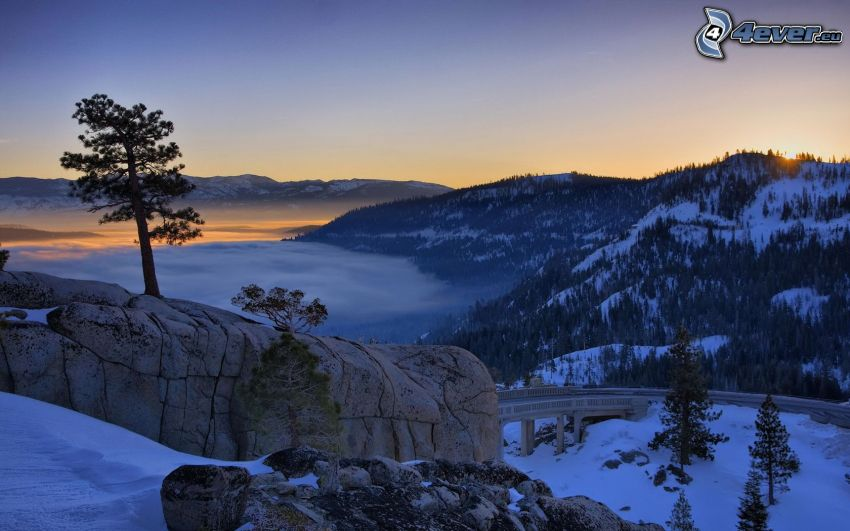 winter landscape, after sunset, tree on a rock, road, snow, inversion, coniferous forest
