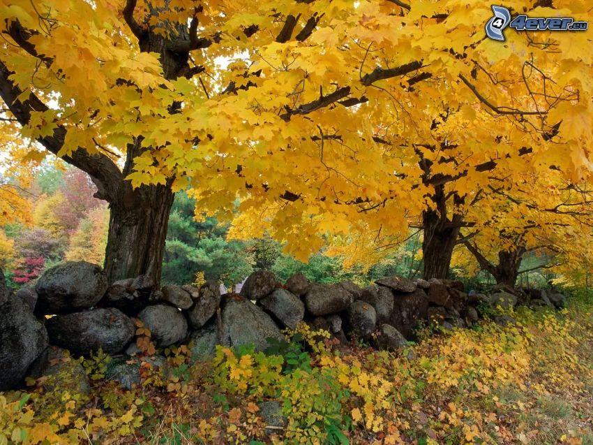 yellow trees, wall, rocks