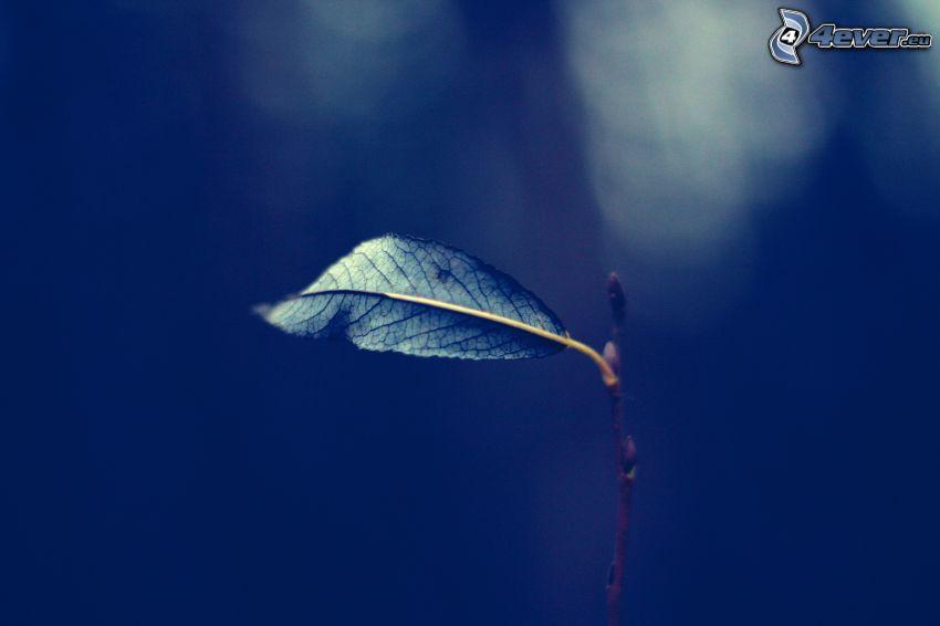 leaf, blue background