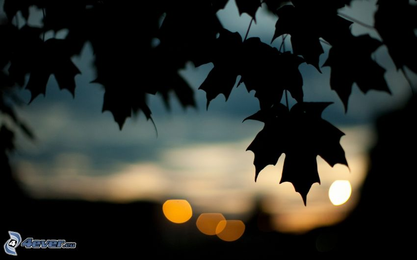 leaves, silhouette