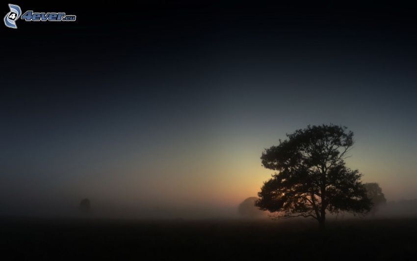 lonely tree, fog
