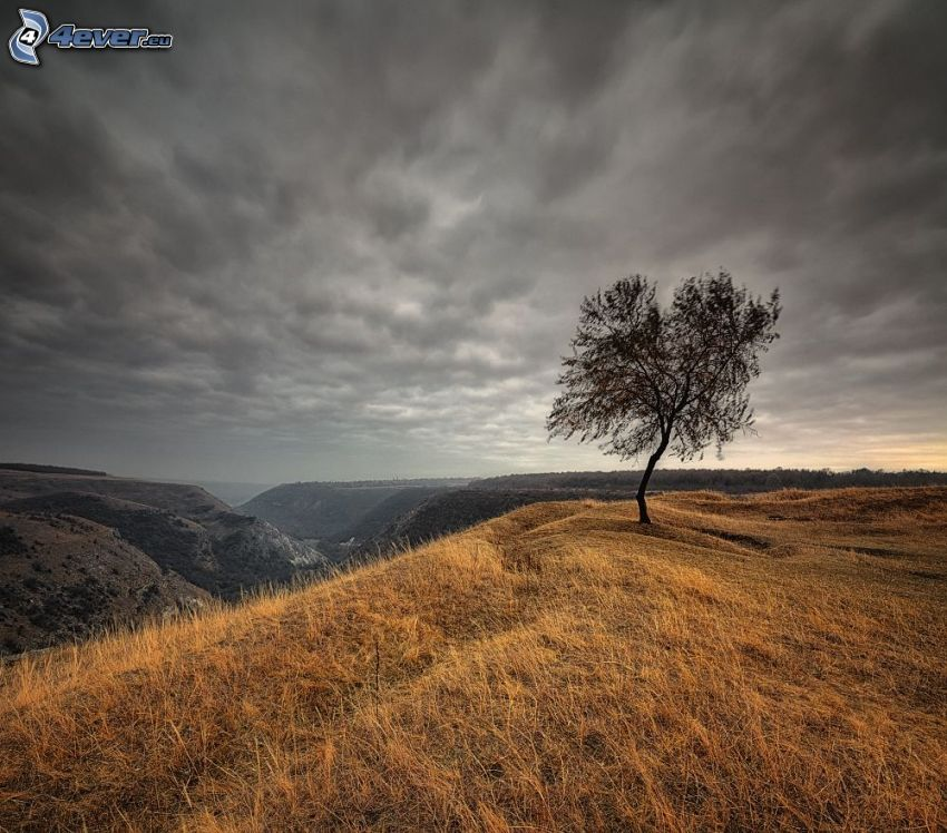 lonely tree, hills, dry grass, view of the landscape, clouds