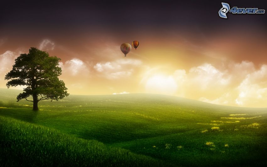 lonely tree, meadow, hot air balloons
