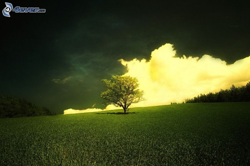 lonely tree, meadow