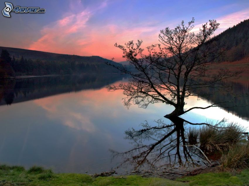 lonely tree, River, forest