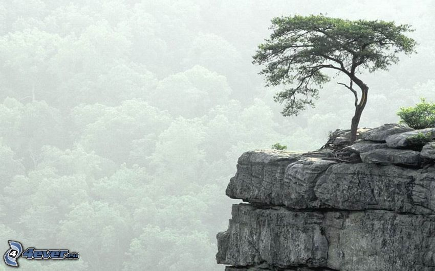 lonely tree, stone, cliff