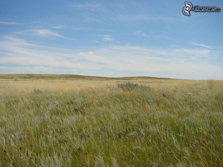 meadow, dry grass