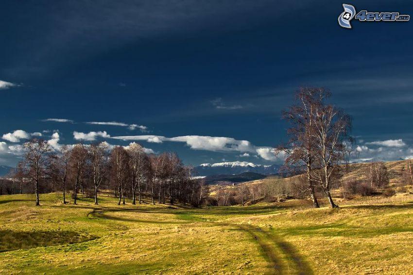 meadow, field path, birches