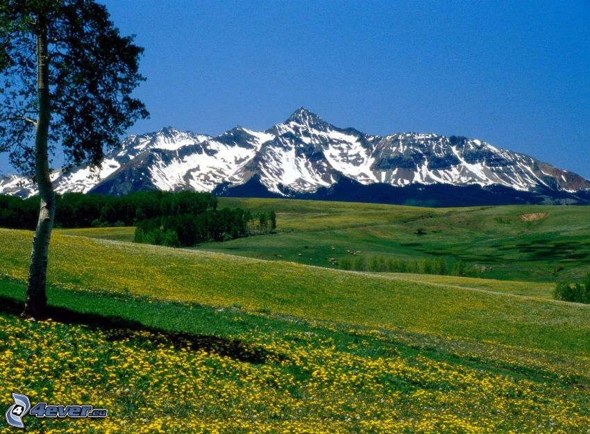 meadow, hill, valley, mountain