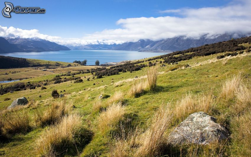 meadow, mountain lake, mountains