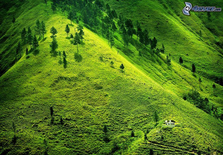 meadow, trees, greenery, hill