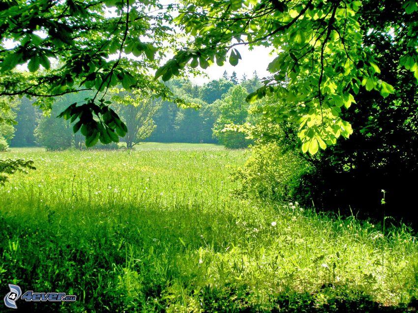 meadow, trees, greenery