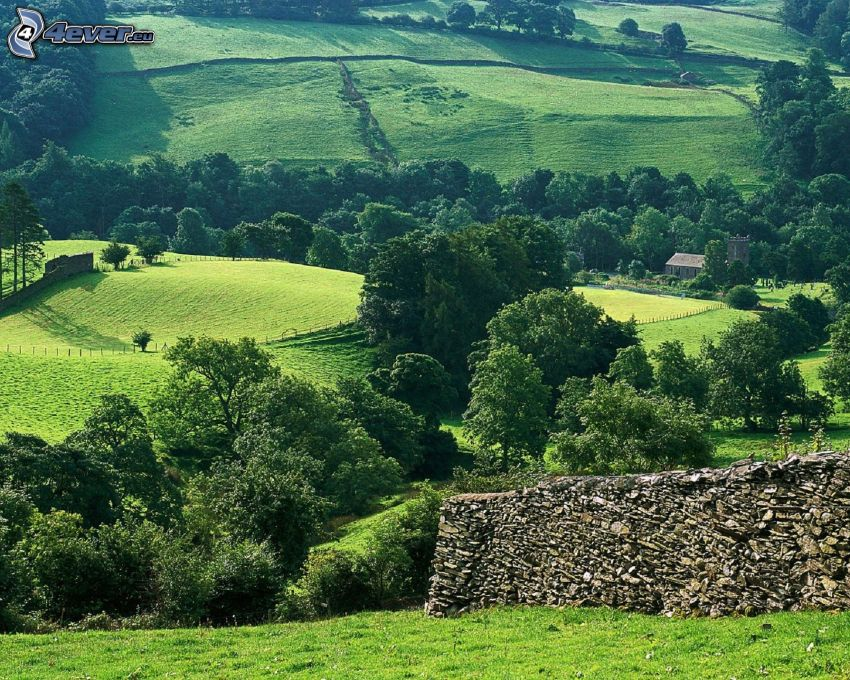 meadows, trees, wall