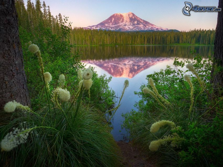 Mount Adams, lake, reflection, coniferous forest