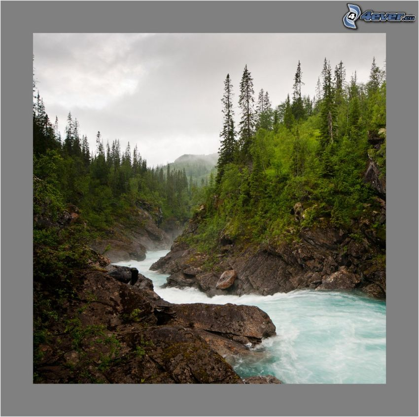 mountain stream, rocks, greenery