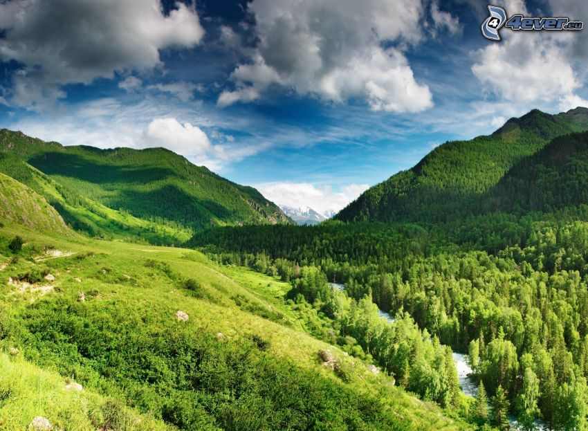 mountains, valley, forest