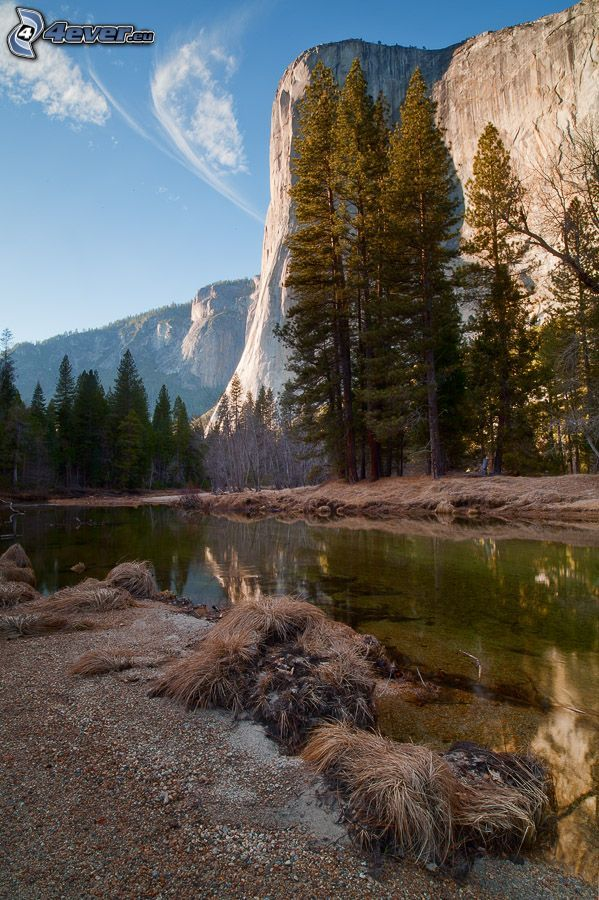 El Capitan, Yosemite Valley, stream, high mountains, rocky mountains, coniferous trees