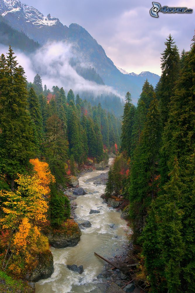 forest creek, colour trees, coniferous forest, high mountains, snowy mountains