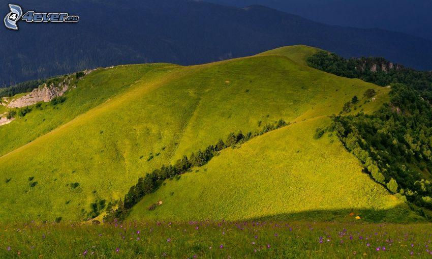 hill, greenery, purple flowers
