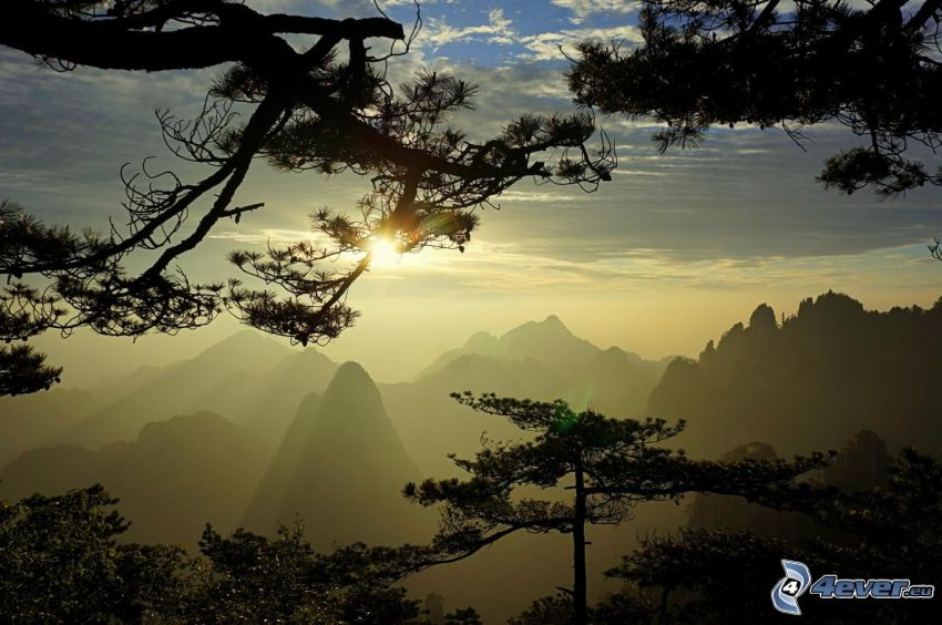 Huangshan, rocky mountains, sunset over mountains, coniferous trees
