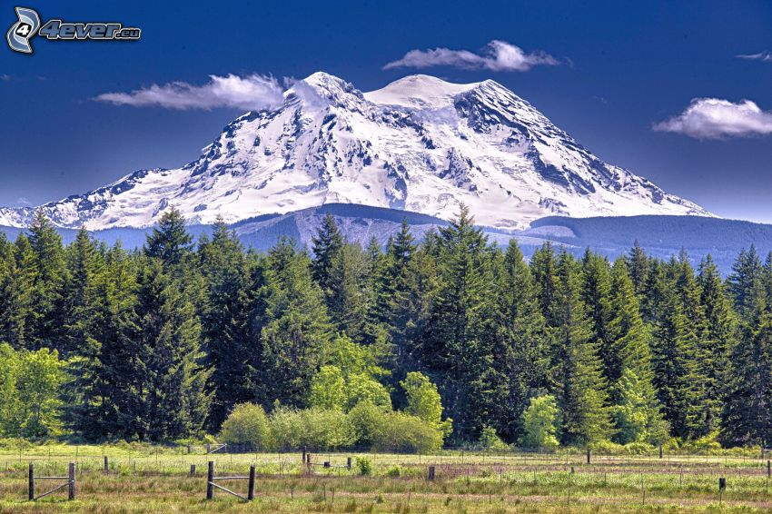 Mount Adams, coniferous forest, snowy hill