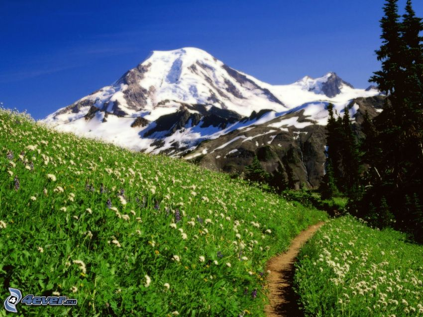 Mount Baker, Snoqualmie National Forest, snowy hill, green meadow, sidewalk, coniferous forest
