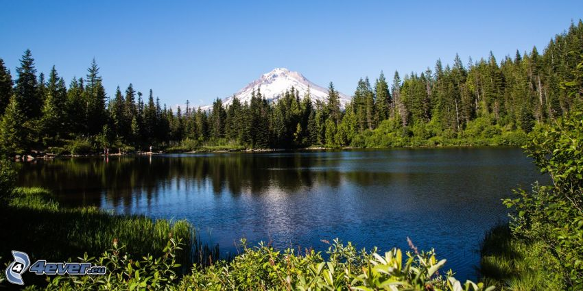 Mount Hood, forest, lake