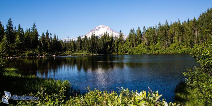 Mount Hood, forest, lake
