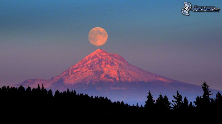 Mount Hood, orange Moon, silhouette of a forest