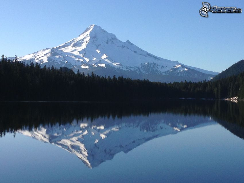 Mount Hood, snowy hill, forest, lake, reflection
