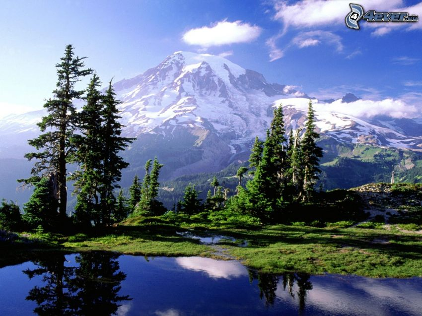 Mount Rainier, volcano, mountain lake, coniferous trees, reflection