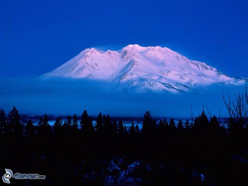Mount Shasta, California, forest, snow