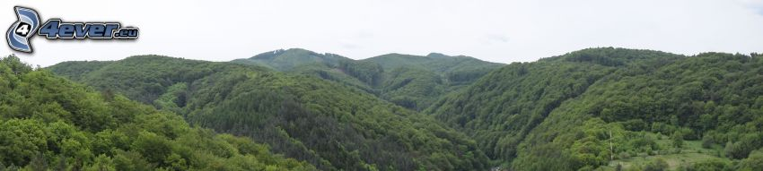 mountain, forest, panorama
