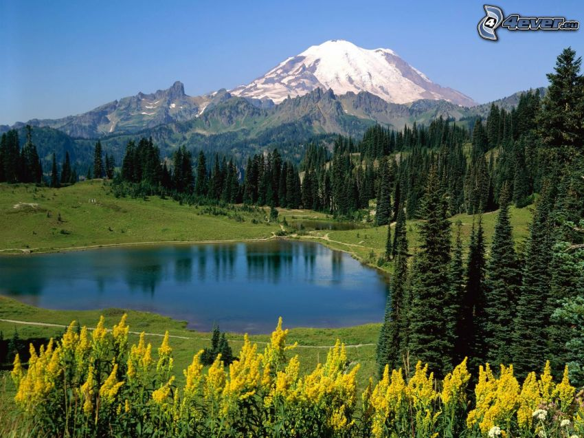 mountain lake, forest, mountains, summer