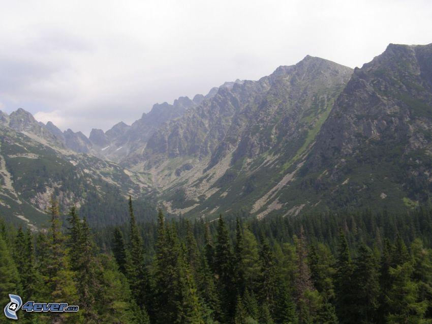 mountains, mountain, forest