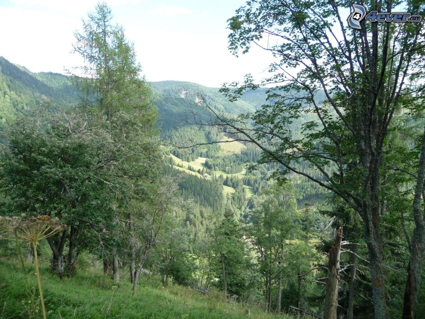 Muránska planina, Slovak Ore Mountains, cottage, forest, trees