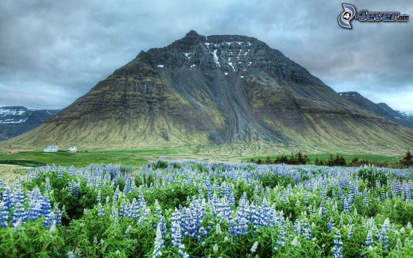 rocky hill, blue flowers