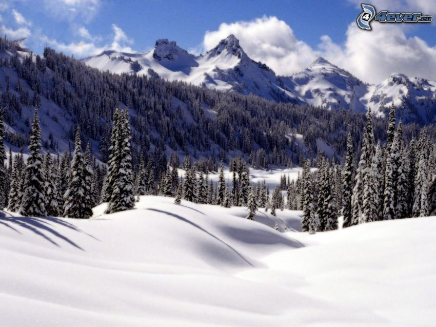 snowy mountains, coniferous trees