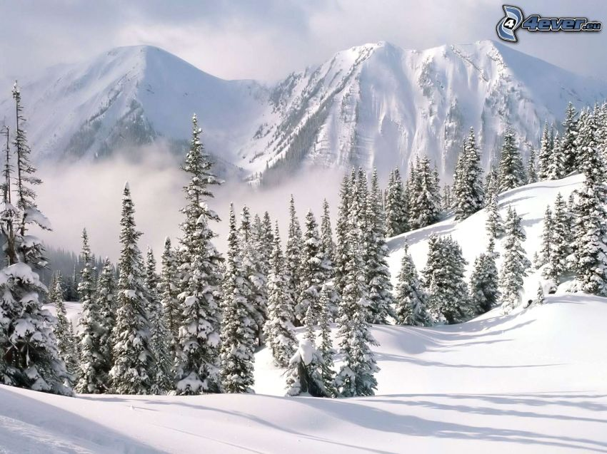 snowy mountains, forest, snow, winter